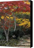 Photos Of Autumn Canvas Prints - Japan-60-18 Canvas Print by Craig Lovell