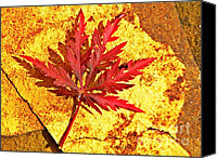 July Canvas Prints - Japanese Maple Leaf on Sandstone Canvas Print by Chris Berry