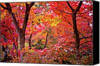 Row Canvas Prints - Japanese Maple Trees Canvas Print by I love Photo and Apple.