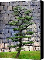 Trees Canvas Prints - Japanese Tree Canvas Print by Roberto Alamino