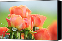 Florida Flowers Canvas Prints - Jardin de Rosas Canvas Print by Melanie Moraga