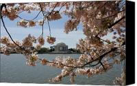 D.c. Photo Canvas Prints - Jefferson Memorial Framed by Cherry Blossoms Canvas Print by Brendan Reals