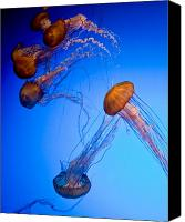 Jelly- Fish Canvas Prints - Jelly Fish IV Canvas Print by James Dricker