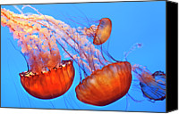 Sea Animals Canvas Prints - Jelly Fish Canvas Print by Jill Buschlen
