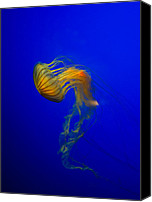 Jelly- Fish Canvas Prints - Jellyfish from the deep blue Canvas Print by Nila Newsom
