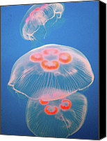 Canada Canvas Prints - Jellyfish On Blue Canvas Print by Sally Crossthwaite