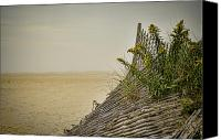 Sand Fences Canvas Prints - Jersey Shore Canvas Print by Heather Applegate