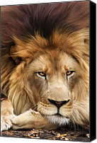 Animals Digital Art Canvas Prints - Joseph Canvas Print by Big Cat Rescue