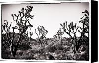 Joshua Trees Canvas Prints - Joshua Dance Canvas Print by John Rizzuto