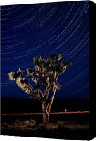 Joshua Canvas Prints - Joshua Tree And Star Trails Canvas Print by Steve Gadomski
