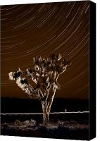 Joshua Canvas Prints - Joshua Tree Night Lights Death Valley BW Canvas Print by Steve Gadomski