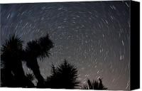 Whalen Photography Canvas Prints - Joshua Tree Star Trails One Canvas Print by Josh Whalen