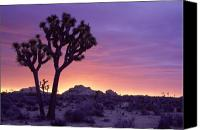 Joshua Canvas Prints - Joshua Tree Sunrise Canvas Print by Eric Foltz