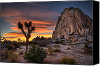California Canvas Prints - Joshua Tree Sunset Canvas Print by Peter Tellone