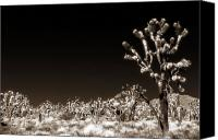 Joshua Trees Canvas Prints - Joshua Trees Canvas Print by John Rizzuto