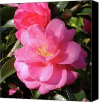 Camelia Canvas Prints - Joy in the Morning Canvas Print by Diane Ferguson