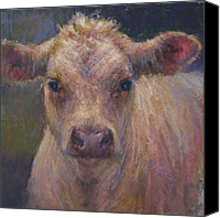 Cattle Pastels Canvas Prints - Julius Canvas Print by Susan Williamson