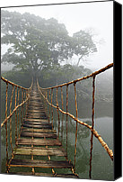 Bridge Crossing River Photo Canvas Prints - Jungle Journey 2 Canvas Print by Skip Nall