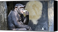 Chimpanzee Photo Canvas Prints - Just Another Day Canvas Print by Fraida Gutovich