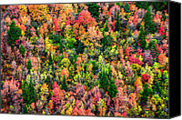 Forest Canvas Prints - Just in Time Canvas Print by Chad Dutson