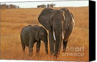 Elephants Canvas Prints - Just Mom and Me Canvas Print by Sandra Bronstein