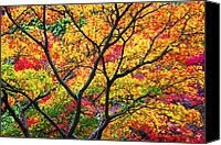 Studies Canvas Prints - Kaleidoscope of Autumn Color Canvas Print by Eggers   Photography