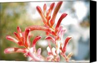 Kangaroo Painting Canvas Prints - kangaroo Paws Canvas Print by Ruth Edward Anderson