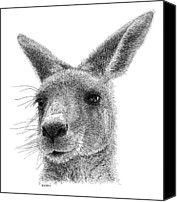 Kangaroo Canvas Prints - Kangaroo Canvas Print by Scott Woyak
