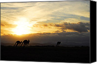 Kangaroo Canvas Prints - Kangaroos and Sunset Canvas Print by Michael Warford