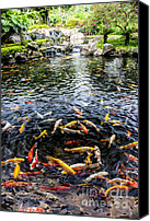 Style Canvas Prints - Kauai Koi Pond Canvas Print by Darcy Michaelchuk