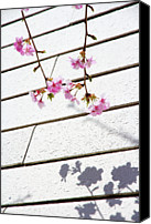 Pink Flower Branch Canvas Prints - Kawadu Sakura Canvas Print by Privacy Policy