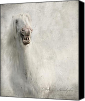 Grey Horses Canvas Prints - Keep Smiling And Be Happy Canvas Print by Dorota Kudyba