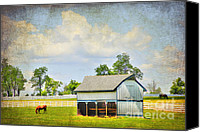 Turf Canvas Prints - Kentucky Pastures Canvas Print by Darren Fisher