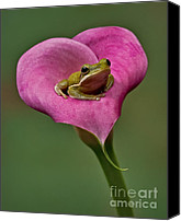 Calla Lily Canvas Prints - Kermit Hangs Out Canvas Print by Susan Candelario