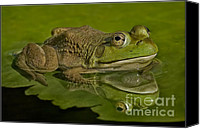 Lilly Pad Canvas Prints - Kermit Canvas Print by Susan Candelario
