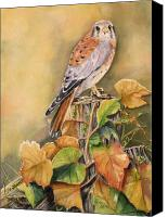 Grapeleaves Canvas Prints - Kestrel in Fall Canvas Print by Patricia Pushaw