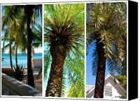 Giclee Trees Canvas Prints - Key West Palm Triplets Canvas Print by Susanne Van Hulst
