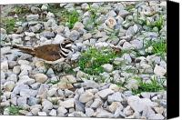 Killdeer Canvas Prints - Killdeer 1 Canvas Print by Douglas Barnett