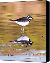Killdeer Canvas Prints - Killdeer Reflection Canvas Print by Betty LaRue