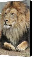 Bigcat Canvas Prints - King of the jungle Canvas Print by Mary Ivy