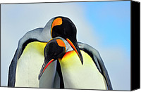 Tony Canvas Prints - King Penguin Canvas Print by Tony Beck
