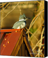 Kingfisher Canvas Prints - Kingfisher At Apex Canvas Print by Robert Frederick