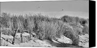 Sand Fences Canvas Prints - Kites Over Dunes - Jersey Shore Canvas Print by Angie McKenzie