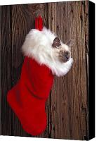 Xmas Photo Canvas Prints - Kitten in stocking Canvas Print by Garry Gay