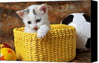 Pet Photo Canvas Prints - Kitten in yellow basket Canvas Print by Garry Gay