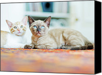 Domestic Animals Photography Canvas Prints - Kitties Sisters Canvas Print by Cindy Loughridge