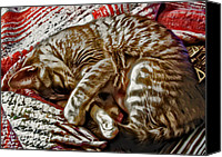 Animals Canvas Prints - Kitty Dreams Canvas Print by David G Paul