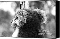 Koala Canvas Prints - Koala Canvas Print by Camilla Brattemark