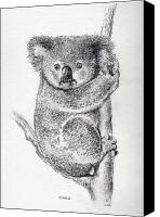 Koala Canvas Prints - Koala Canvas Print by Colin Parker