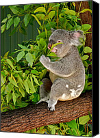 Koala Canvas Prints - Koalas Love Their Eucalyptus Canvas Print by Kirsten Giving